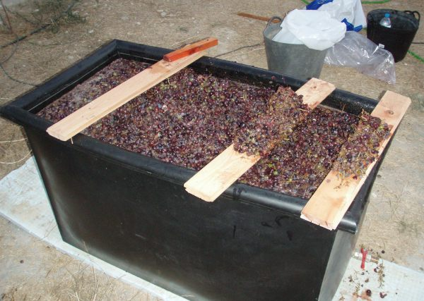 Pressed grapes