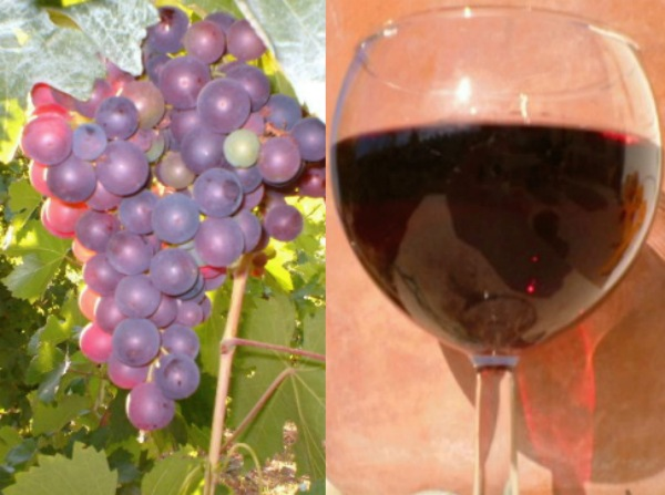 'Liatiko' grapes and wine