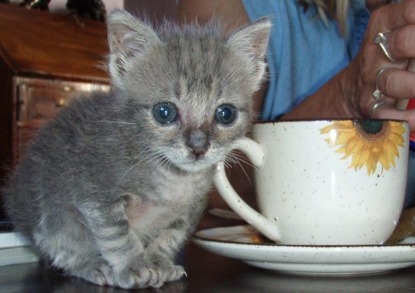 Kitten tea time
