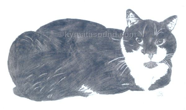 soft pencil drawing of my cat Tippy